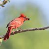 July 6 2018 - Cardinal