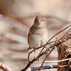March 7 2018 - Sparrow