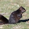 March 30 2018 - Squirrel