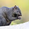 November 20 2018 - Squirrel