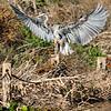 September 2 2018 - Heron Landing