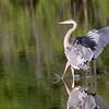 September 6 2018 - Heron Landing