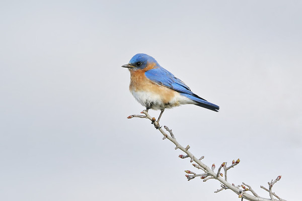 April 26 2019 - Bluebird