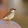 April 17 2019 - Sparrow