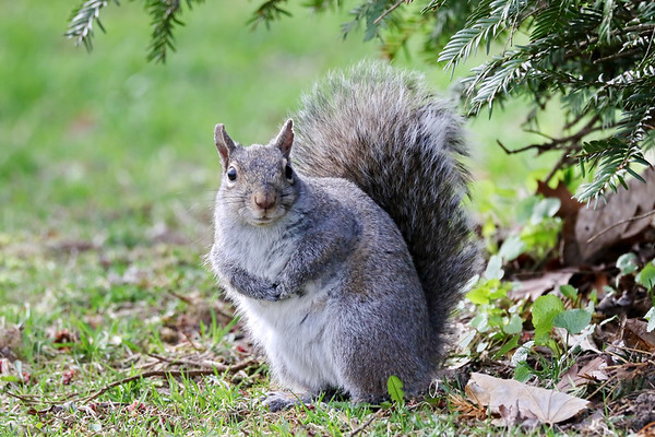 April 27 2019 - Squirrel