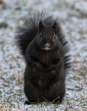 December 15 2019 - Squirrel