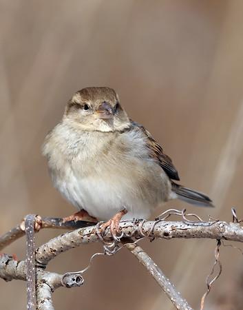 February 5 2019 - Sparrow