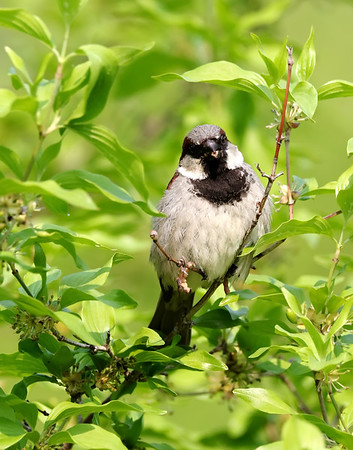 June 3 2019 - Sparrow