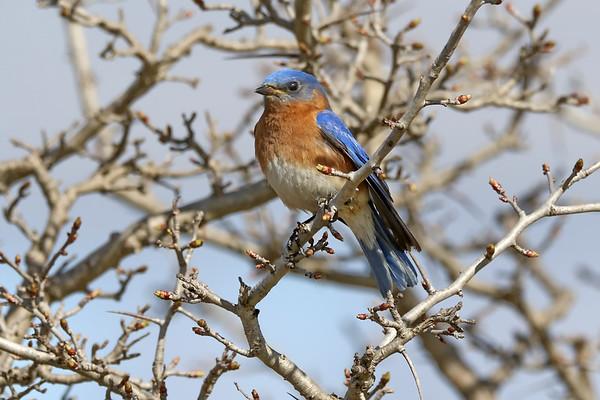 May 16 2019 - Bluebird