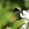 May 29 2019 - Bumblebee