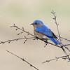 May 1 2019 - Bluebird
