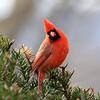 May 3 2019 - Cardinal
