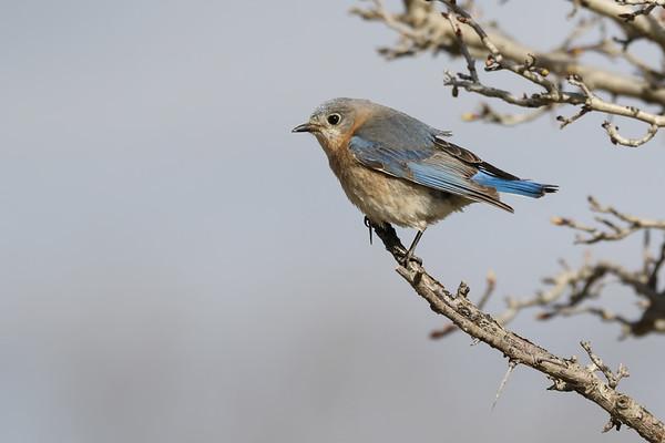 May 20 2019 - Bluebird