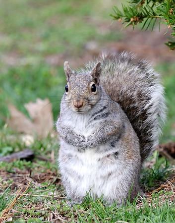 November 7 2019 - Squirrel
