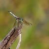 October 2 2019 - Dragonfly