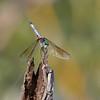 September 5 2019 - Dragonfly