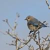 April 6 2020 - Bluebird