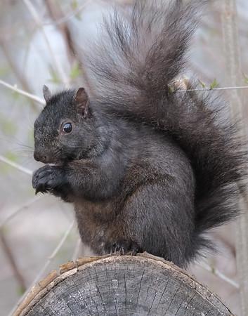 April 23 2020 - Squirrel