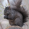 April 23 2020 - Squirrel