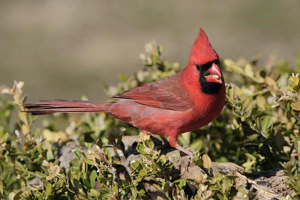 April 1 2020 - Cardinal