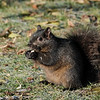 December 24 2020 - Squirrel