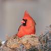 February 7 2020 - Cardinal