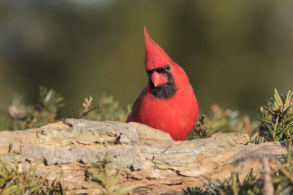 February 22 2020 - Cardinal