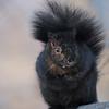 February 15 2020 - Squirrel