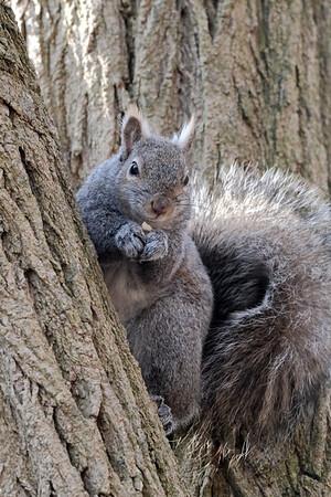 February 28 2020 - Squirrel