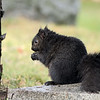 January 27 2020 - Squirrel