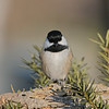 January 5 2020 - Chickadee
