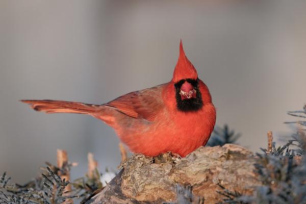 January 26 2020 - Cardinal