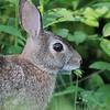 July 25 2020 - Rabbit