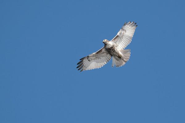 March 25 2020 - Hawk
