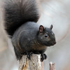 November 27 2020 - Squirrel