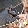 April 9 2021 - Squirrel