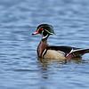 February 16 2021 - Wood Duck