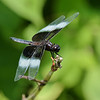 July 27 2021 - Dragonfly
