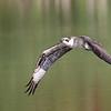 May 9 2021 - Osprey
