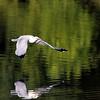 October 19 2021 - Ring Billed Gull