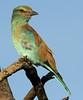 birds-TenaCJed