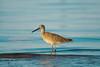 birds-028