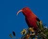 birds-034