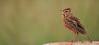 birds-037