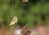 birds-016