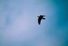 birds-036