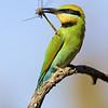 birds-wayne_eddy (Max 1)