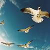 birds-K-style