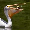 birds-Back288