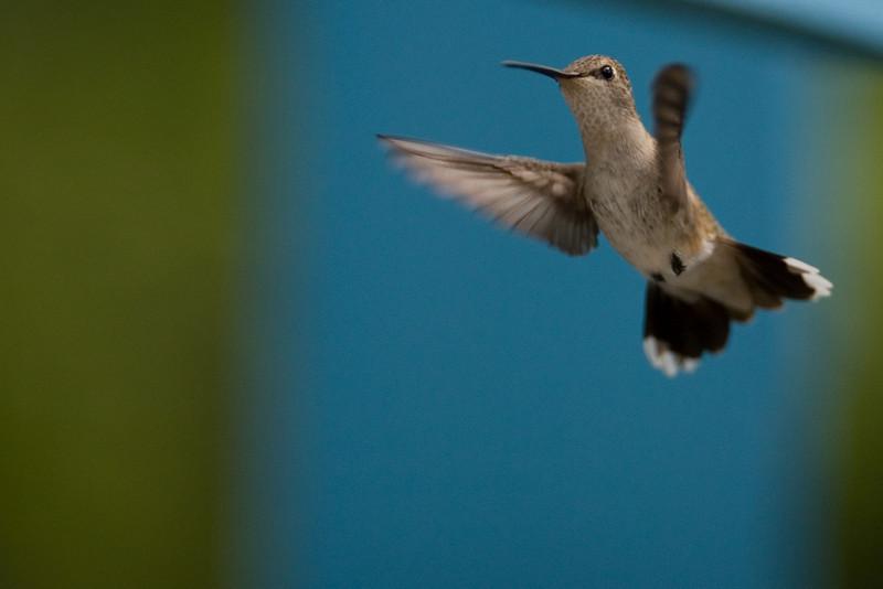 birds-airfrogusmc